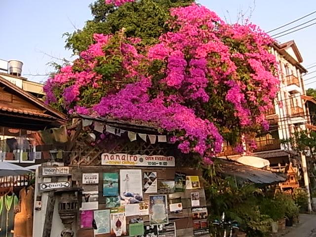 Nanairo / Serectshop Chiangmai Thailand